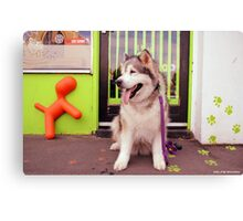 Paws - Katie outside the pet shop Canvas Print