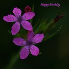 Happy Birthday Viv ! by Renee Blake