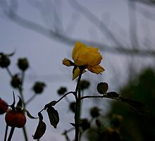 He That Dares Not Grasp The Thorn Should Never Crave The Rose (Part One) by Lou Wilson
