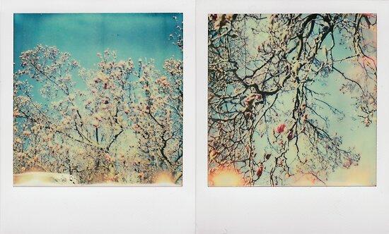 sunny magnolia by Jill Auville