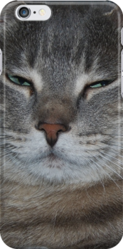 Cat by jesslla