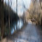 Is It Just My Imagination (Running away with me) by Robin Webster