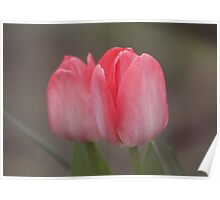 Tulip Double Poster