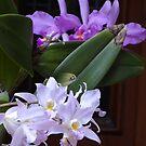 Orchids - Orquídeas by Bernhard Matejka