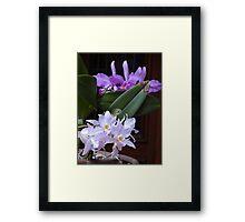 Orchids - Orquídeas Framed Print