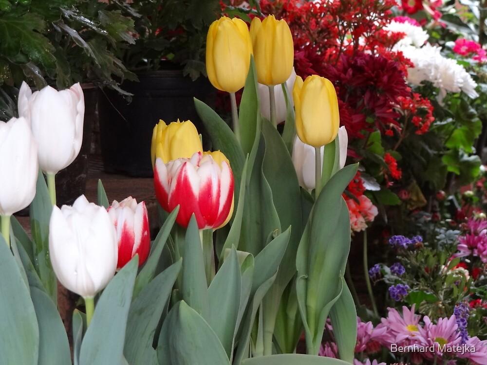 Flowers - Flores by Bernhard Matejka