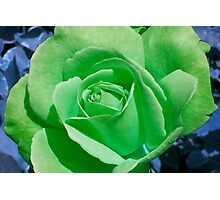 Cheerful Green Photographic Print