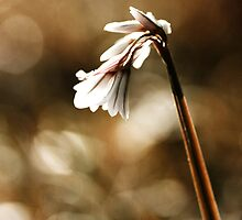 White bell by lorrainem