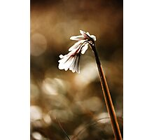 White bell Photographic Print