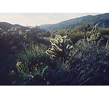 Desert Spring Bloom #3, Anza-Borrego Photographic Print