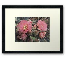 Desert Flower With Bee Framed Print