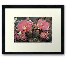 Desert Flower Framed Print