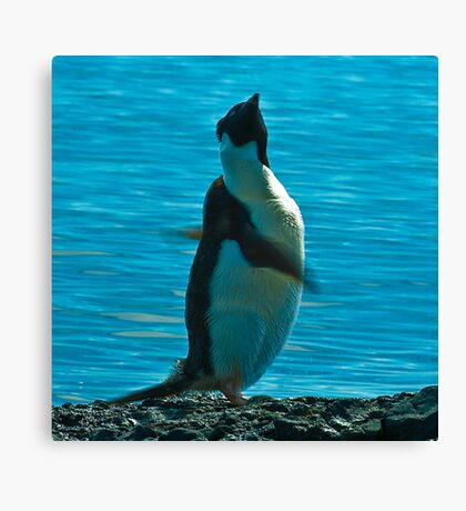 Penguin Swirl Canvas Print