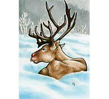 Reclining Rudolph Photographic Print