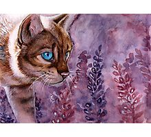 Azure Eyes Photographic Print