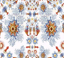 Siphonophorae based on an image by Ernst Haeckel, a pillow, etc. design by Dennis Melling