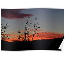 Old Thistle Patch At Evening  Poster
