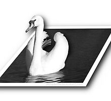 Swan (Out of Bounds) by UnclippedWings