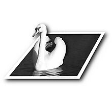 Swan (Out of Bounds) Photographic Print