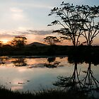 Watering Hole Sunset, Serengeti, Tanzania by BH Neely