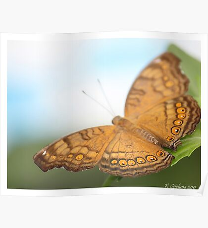 Brown and orange butterfly Poster