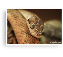 brown and glossy Canvas Print