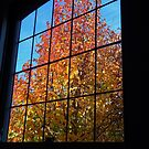 Autumn Outside by Jeanette Varcoe.