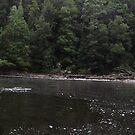 pano at Arthur River - n.w. Tasmania by gaylene