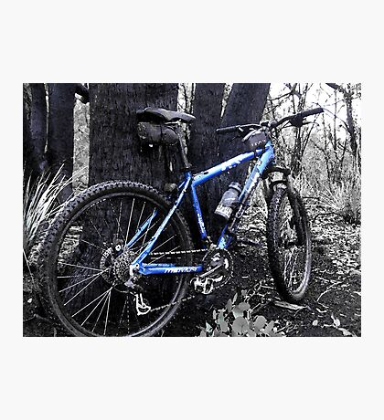 Forest Ride Photographic Print