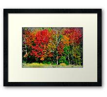 Color Fest Framed Print