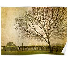 Vineyard with Tree Poster