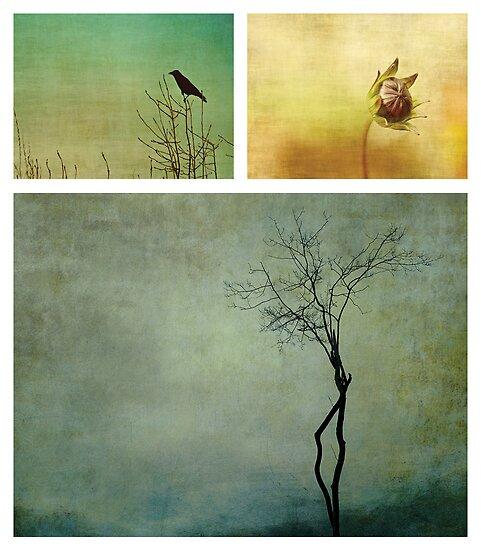 Nature by Anne Staub