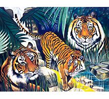 Tigers in the forest Photographic Print