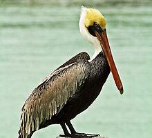 Pelican by Thad Zajdowicz