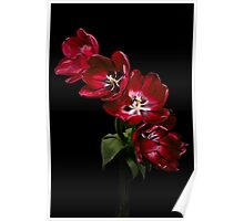 Red Tulips on Black Poster