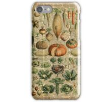 Autumn Fall Vegetables Vegetarian Vegan Thanksgiving Dictionary Organic Art Vintage Cottage Chic iPhone Case/Skin