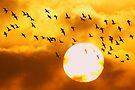 Sunrise Brent Flock by Neil Bygrave (NATURELENS)