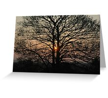 Tree at Sunrise Greeting Card