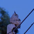Great Horned Owl on a Utility Pole by afroditi katsikis