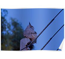 Great Horned Owl on a Utility Pole Poster