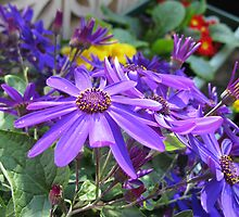 Echo of Spring - Glorious Senettti Planter by BlueMoonRose