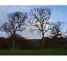 3 Trees by LL Photographic Print