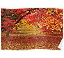 Colours in an Acer Glade Poster