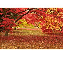 Colours in an Acer Glade Photographic Print