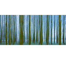 Frosted Copse Impression Photographic Print