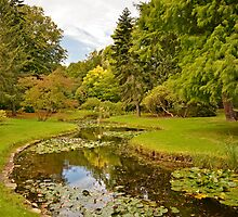 National Botanic Gardens, Dublin by Martina Fagan