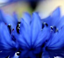 Blue flower by Christina M. Munich