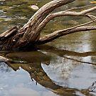 Mulgrave River Tree by Chris Cohen