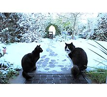 Cool for Cats Photographic Print