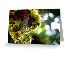 Cloud Forest Web Greeting Card